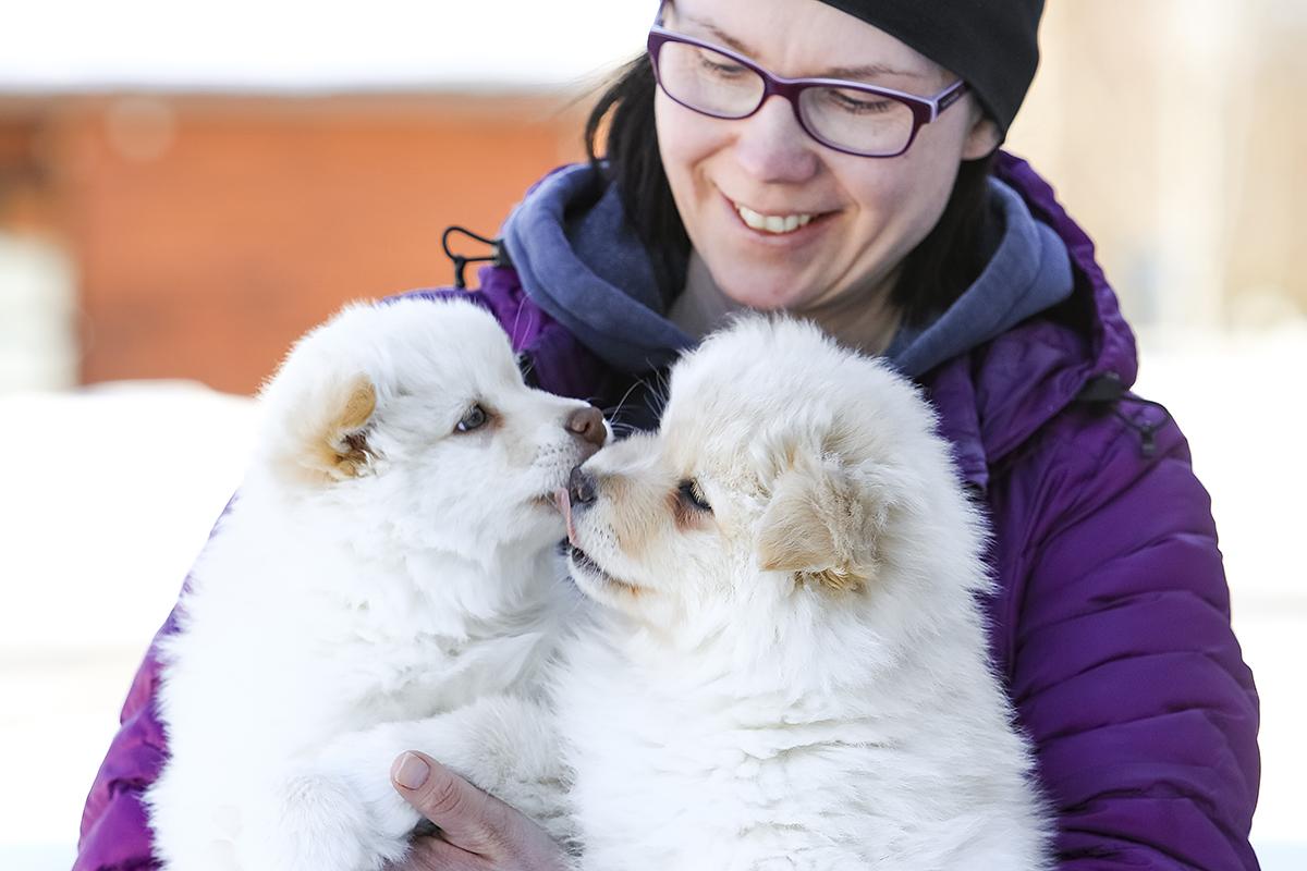 Eläintenhoidon ammattitutkinto, eläinhoitola, eläinten kouluttaminen