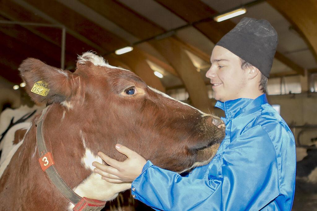 maatalousalan opiskelija rapsuttaa lehmää navetassa
