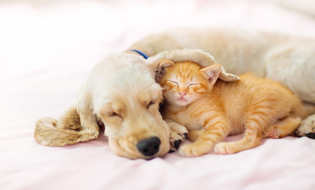 koiranpentu ja kissanpentu nukkuvat vierekkäin