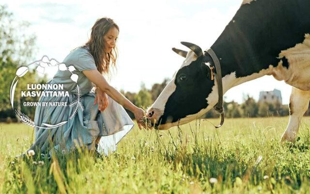 Kesäniityllä tyttö on kyykyssä ja tarjoaa heinää lehmälle.